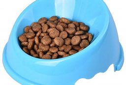 Put the Gift of Good Health in Your Cat's Food Dish